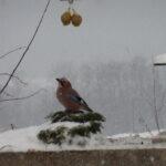 Winter 2010 151