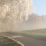 Gabi Conzett Baum Winter Neschwil