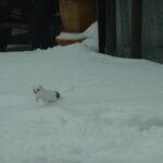 Urs Hutmacher Winter 12 13 266
